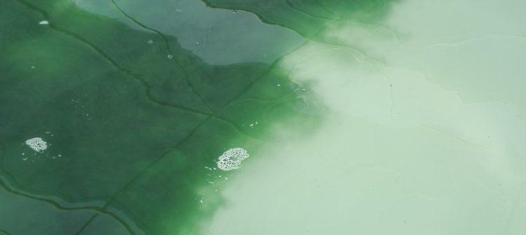 Ensemencement du Bassin de Spiruline de Rospico