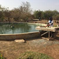 ferme de spiruline du Père Michel, Bamako